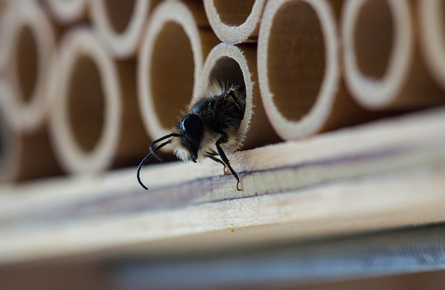 5 astuces pour éradiquer naturellement les insectes de sa maison