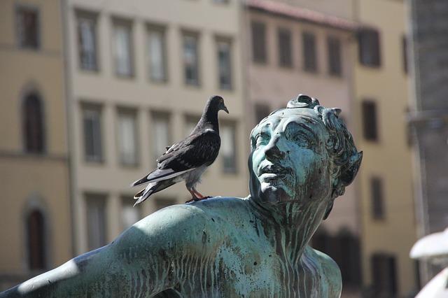 Pourquoi la fiente des pigeons est-elle dangereuse?