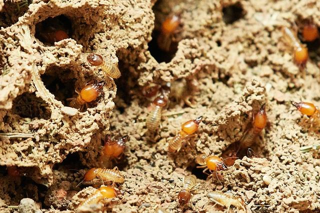 5 astuces pratiques pour se débarrasser des termites dans votre nouvelle maison